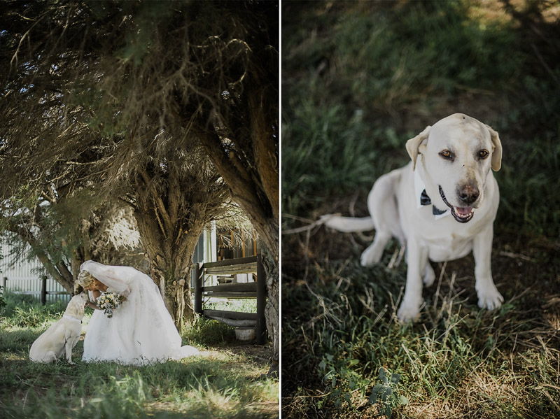 Baxter Barn Wedding, Immerse Photography, Baxter Barn, Mornington Peninsula Weddings, Toast Magazine, Rustic Barn Wedding, Garden Wedding, Bloominel Flowers, Bride Prep, Miss Gowns Berwick, Dogs at Weddings
